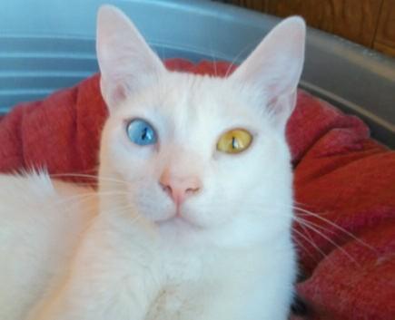 Matisse dagli occhi diversamente colorati