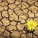 Resilienza al Niguarda, ovvero un cammino verso il sole