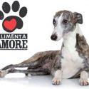 Coop Lombardia e Comune di Milano fianco a fianco per aiutare cani e gatti in difficoltà