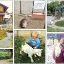 La Fattoria Turati di via Bauer, museo vivente degli animali