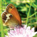 Settembre tempo delle ultime farfalle