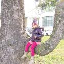 L'albero panchina