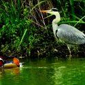 Al Lago Niguarda ospiti fissi e provvisori