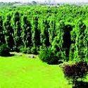 Altri 8000 alberi al Parco Nord: Riprende la stagione delle piantagioni