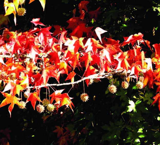 Arrivati all'autunno previsto